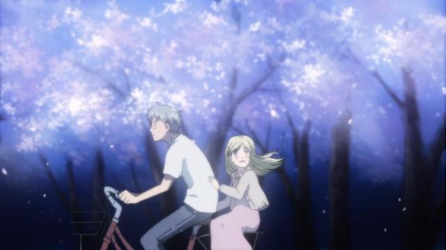 takemoto hagu cherry blossoms